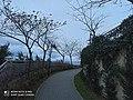 Ağaçlı yol.jpg
