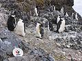 ASKO na Antarktida.jpg