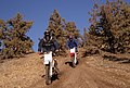 ATV riding Grassland, Ochoco National Forest (36456358141).jpg