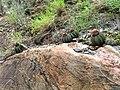 A Caatinga 1.jpg