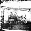 A camel with its owner, Peking, Pechili province, China Wellcome L0018885.jpg