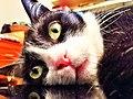 A cat.jpeg