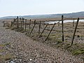 A dilapidated stock fence - geograph.org.uk - 1181049.jpg