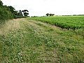A field margin - geograph.org.uk - 879016.jpg