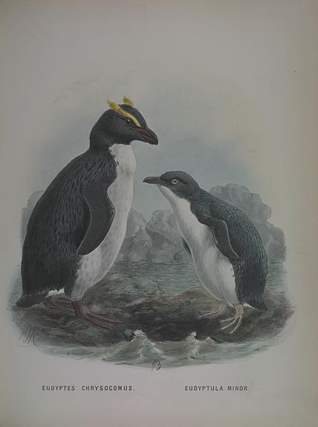 File:A history of the birds of New Zealand (7157828090).jpg