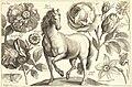 A horse. Etching by Wenceslaus Hollar (1607-1677) Animalium, Ferarum, & Bestiarum (1663).jpg