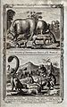 A variety of animals from different parts of the world, incl Wellcome V0022876.jpg
