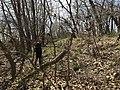 A woman surveys a trail trace at Rock Creek Crossing in Council Grove, KS (504ec587704d4d1e9addab7d1776f52d).JPG