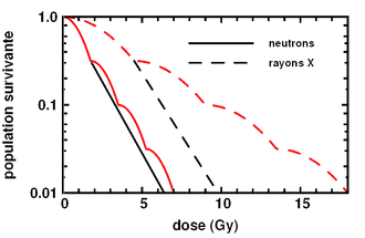 Cell survival curve - Proportions of surviving mammal cells to radiation as a function of its severity (in Gy). Black lines are acute radiations, while red lines are temporally fragmented. Solid lines represent neutron radiation and dashed lines X-ray radiation.