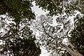 Adelaide (AU), Botanic Garden -- 2019 -- 0667.jpg