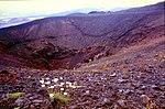 Aetna-180-Krater-Gaensebluemchen-1986-gje.jpg