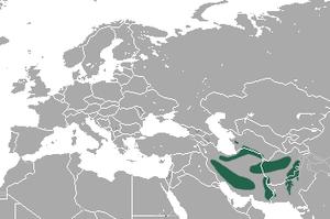 Afghan pika - Image: Afghan Pika area
