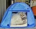 Agathe se croit en camping, Hi^ Hi - panoramio.jpg