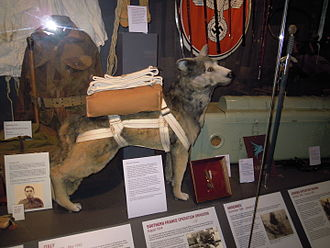 Bing (dog) - Bing the ParaDog displayed with his Dickin Medal at the Imperial War Museum Duxford