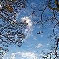 Airplane over Broxted Essex England - Ryanair approaching Stansted.jpg