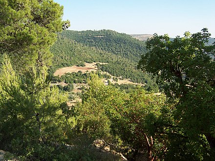 A forest in Ajloun, northern Jordan. Ajlun Green.jpg