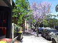 Alexandria NSW 2015, Australia - panoramio (238).jpg