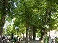 Allee Friedhof Nördlingen.JPG