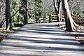 Along The Wooden Path (200964101).jpeg