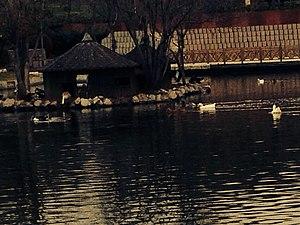 Altınpark - Image: Altınpark swans 04