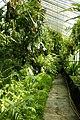 Alten Botanischen Garten Göttingen kz01.jpg