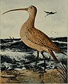 American ornithology for the home and school (1902) (14563668607).jpg