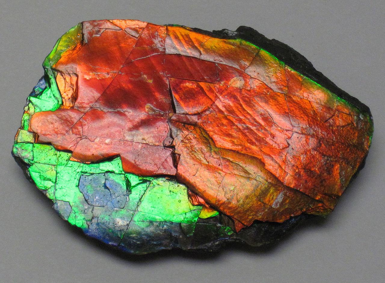 File:Ammolite from Placenticeras fossil ammonite, Alberta ...