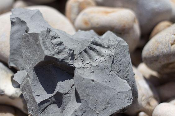 Ammonite at Jurassic Coast, Golden Cap, Dorset -9332.jpg