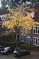 Amsterdam Noord 10 2013 - panoramio.jpg