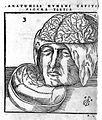 Anatomiae, capitis humani Wellcome L0010691.jpg