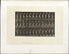 Animal locomotion. Plate 179 (Boston Public Library).jpg