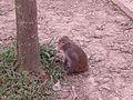 Animals at Bangabandhu Sheikh Mujib Safari Park.jpg