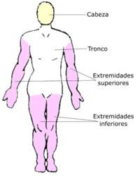 Cuerpo Humano Vikidia