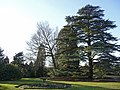 Arboretum, West Lodge Park, Hadley Wood,Hhertfordshire - geograph.org.uk - 1163928.jpg