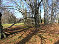 Arboretum Zürich 2012-03-12 14-15-08 (P7000).JPG