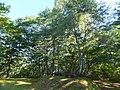 Arimine, Toyama, Toyama Prefecture 930-1458, Japan - panoramio (6).jpg