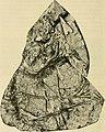 Arkiv för zoologi (1908) (20308820726).jpg