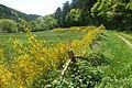 Armuthsbachtal 20140518-005-w2.jpg