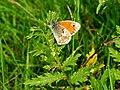 Artenvielfalt im LSG Oldhorster Moor 15.jpg