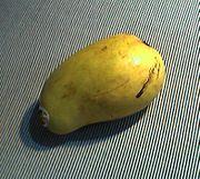 Ataulfo mango.jpg