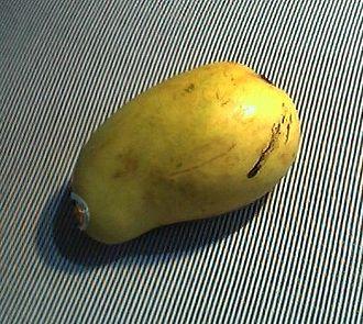 Soconusco - Ataulfo mango from Soconusco
