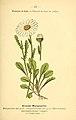 Atlas de poche des plantes des champs, des prairies et des bois (PLATE 53) (6022561176).jpg