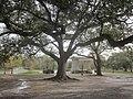 Audubon Park Oak Pavillion.jpg