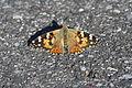 Ausgefalteter rot-schwarzer Schmetterling.JPG