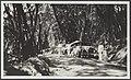 Auto's op een bosweg, waarschijnlijk in Indonesië, Bestanddeelnr 35A 3.jpg