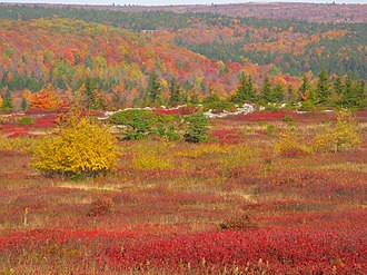 "Dolly Sods Wilderness - The ""High Sods"" in fall colors."