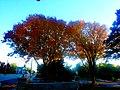 Autumn Colors in Maple Bluff - panoramio (3).jpg