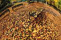 Autumn Planet (5141676190).jpg