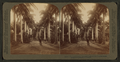 Avenue of Royal Palms, Queen's Hospital grounds, Honolulu, Hawaiian Islands, by Underwood & Underwood.png