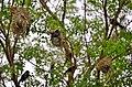 Aves en la Reserva Mbaracayú 3.jpg